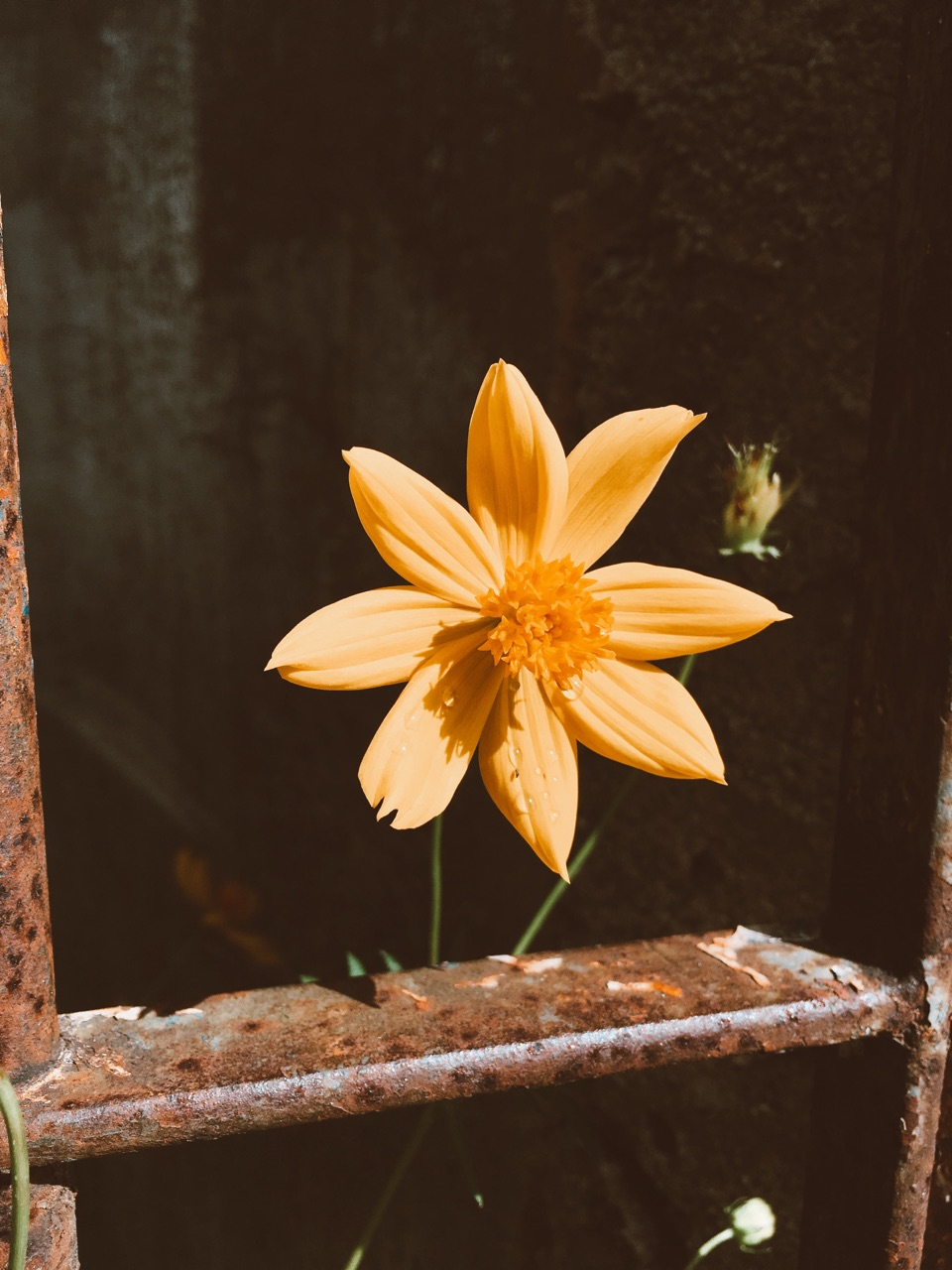 bloom, morning, and nature image
