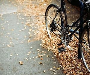 autumn, bike, and fall image