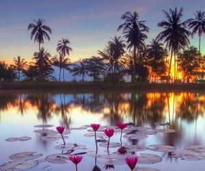 lake, palms, and travel image
