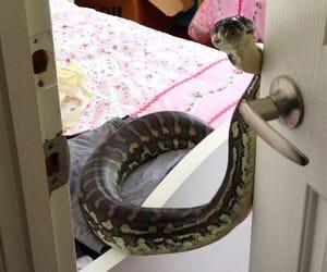 snake, funny, and tumblr image