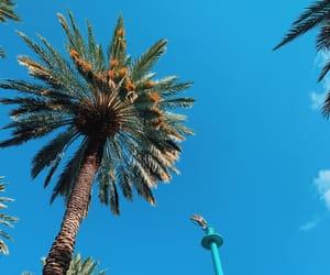 beach, blue, and florida image