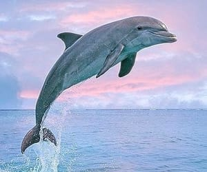 animals, dolphin, and jump image
