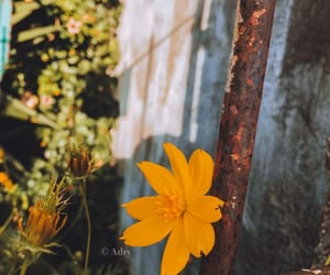 feed, flowers, and nature image