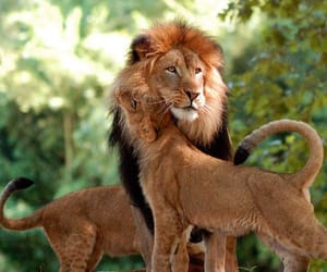 beautiful, cats, and family image