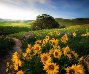flowers, path, and landscape image