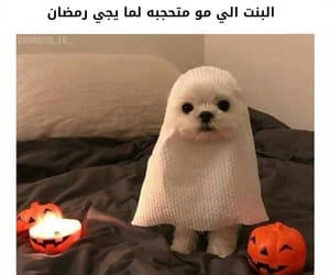 dogs, hhhhh, and كلبّ image