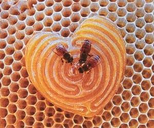 bee, honey, and theme image