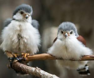 bird, fluffy, and animal image