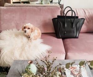 bag, celine, and dog image