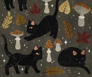 autumn, mushrooms, and cat image