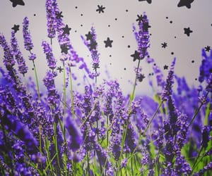 lavender and stars image