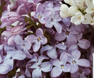 bush, flowers, and lilac image