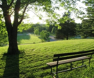 nature, park, and peaceful image