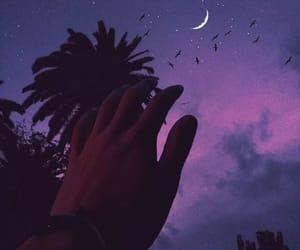 birds, la, and dark image