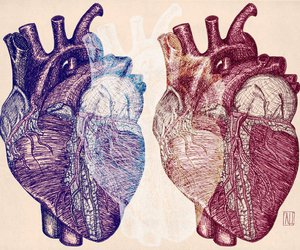 drawing, heart, and illustration image