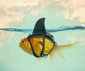 funny picture, goldfish, and shark image