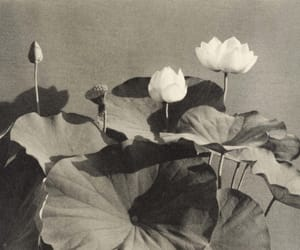 Teiko Shiotani Lotus Flower 1935