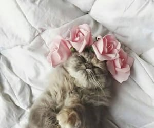 adorable, asleep, and bed image