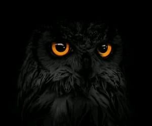 owl, black, and animal image