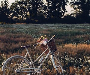 bike, flowers, and summer image