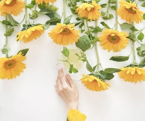 cup of tea, flowers, and sunflowers image