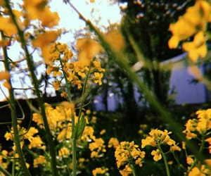 aesthetics, flowers, and nature image