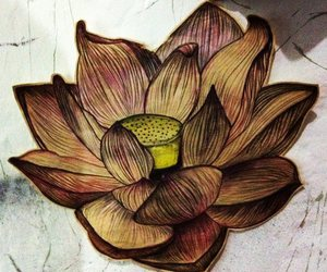drawing, lotus flower, and tattoo image