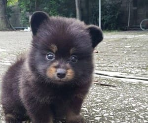 animals, cute puppies, and baby animals image