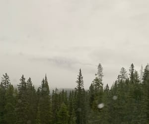 Alberta, mist, and canada image