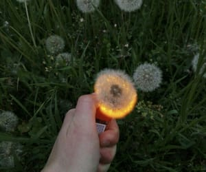 fire, flowers, and aesthetic image