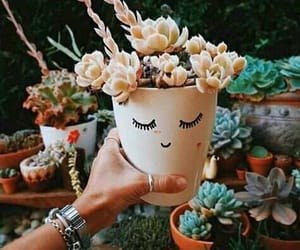 cacti, flowers, and garden image