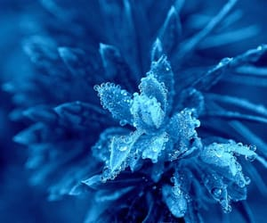 blue and plant image