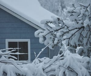branches, winter, and house image