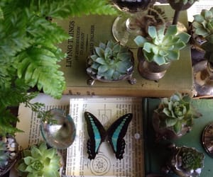 butterfly, pagan, and plants image