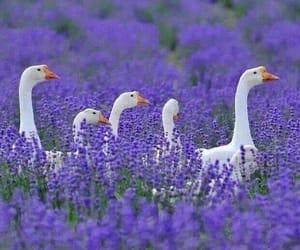 animals, birds, and fields image