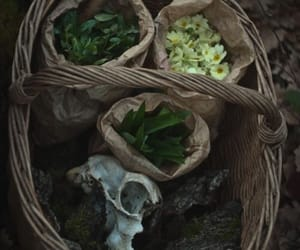 pagan, witch, and wiccan image
