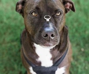 dog, doggy, and doglover image