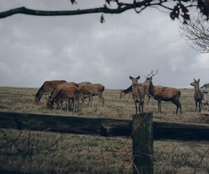 animals, cloudy, and deers image