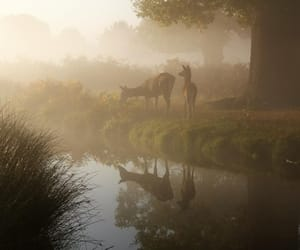 deers, mysterious, and fog image