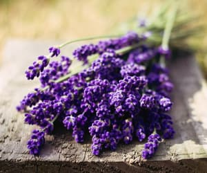 flower, flowers, and lavender image