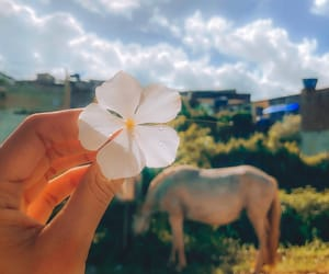 feed, flowers, and horse image