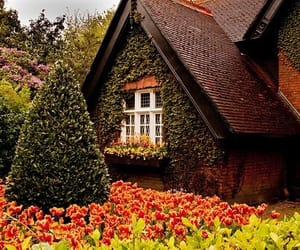 house, ireland, and flowers image