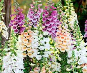flowers and foxgloves image