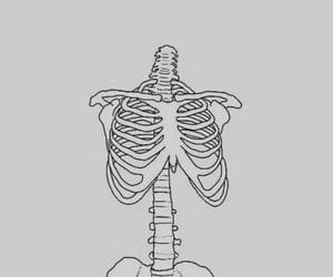 skeleton, bones, and art image