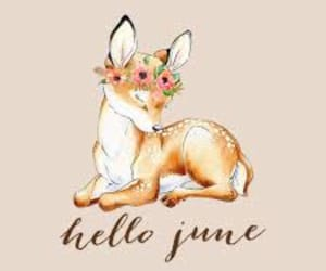 bambi, hello, and june image