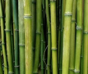 aesthetic, aesthetics, and bamboo image
