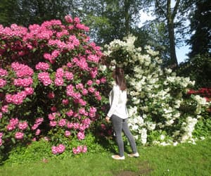 flowers, spring, and germany image
