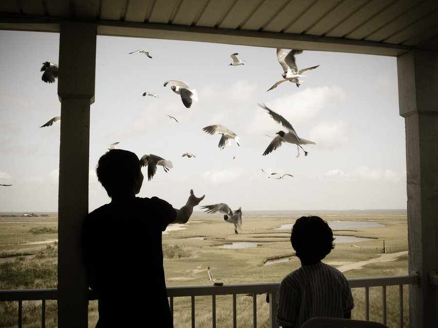 birds, serene, and silhouettes image