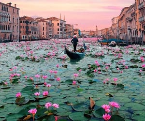 flowers, travel, and venice image