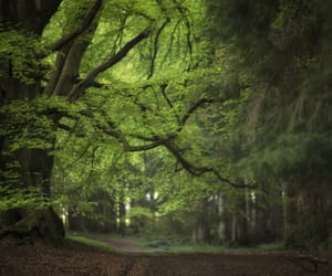 fairytale, forest, and green image
